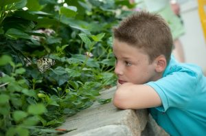Butterflys @ Lewis Ginter Botanical Garden - Stephanie Gross 434.962.2019