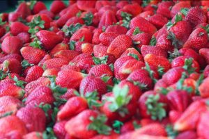 Strawberry Faire - Strawberries4-26-2017 2-40-54 PM