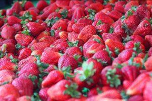 Strawberry Faire - Strawberries4-26-2017 2-40-54 PM