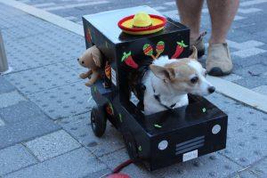 Petoberfest - dog in truck