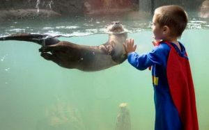Boo at the Zoo - Otter-Superman