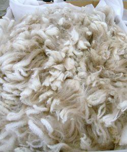 Wool 8de3421d679f6b2f85cecd8e89c80b05
