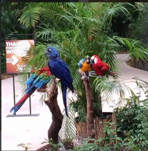 Jungle Ialand's Parrots