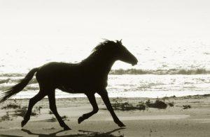 Wild Horses - Cumberland Island
