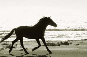 wild-horses-cumberland-island